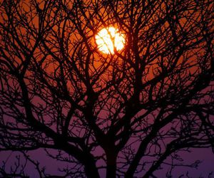 sun, sunset, and tree image