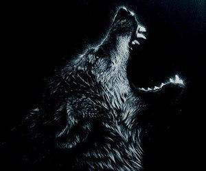 wolf and black image