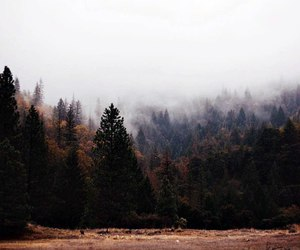 dark, forest, and hipster image