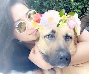 shay mitchell, snapchat, and dog image