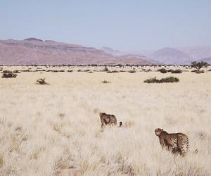 animal and travel image
