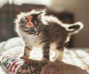 cats, pet, and cute image