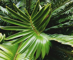 green and palm image