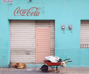 blue, cocacola, and dog image