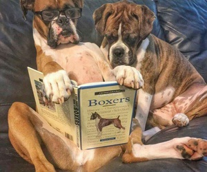 dog and book image