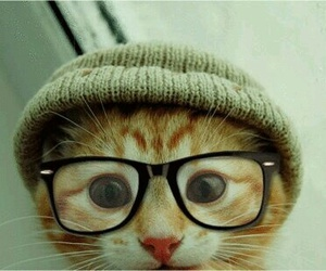 glasses, cat, and grant gustin image