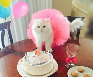 animals, cake, and cat image