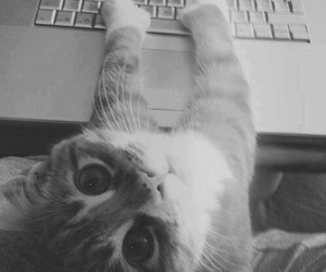 black and white, cat, and photography image