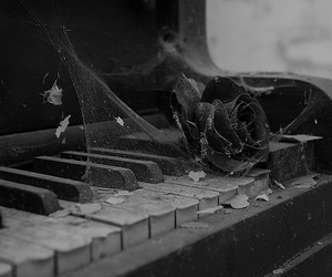 piano, rose, and black and white image