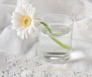 flowers, shabby chic, and decor image