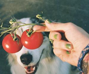 dog, tomato, and funny image