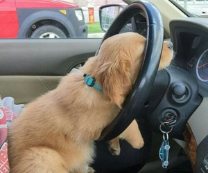 cars, dogs, and cute animals image
