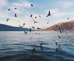 bird, sea, and nature image