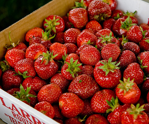 strawberry, food, and berries image