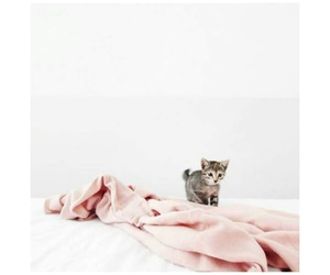 animals, baby pink, and beautiful image