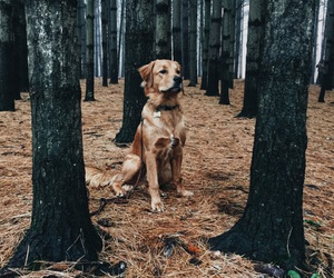 adventure, dog, and indie image