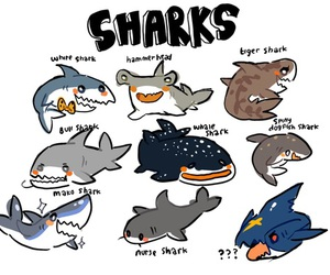 shark and cute image