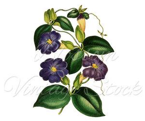 antique, botanical, and etsy image