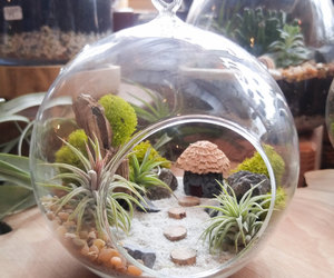 etsy, gift, and plants image