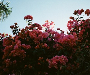 flowers, lany, and music image