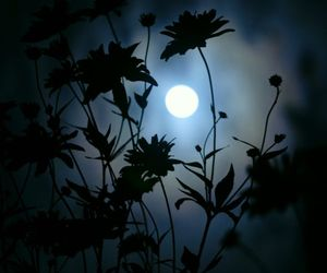flowers, moon, and dark image