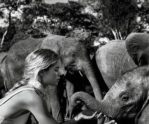 elephant, Doutzen Kroes, and model image