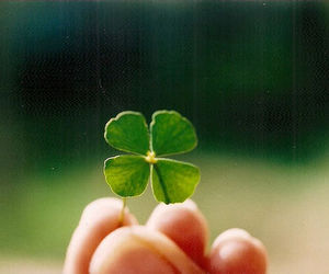 green, clover, and luck image
