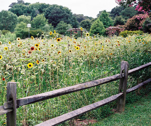 35mm, summer, and virginia image