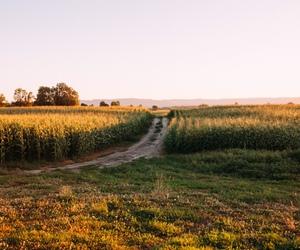 corn field, landscape, and earth image