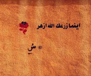 كلمات, منقول, and اقتباسً image