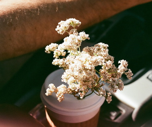 35mm, flowers, and vintage image