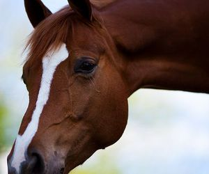 beautiful, magnifique, and cheval image