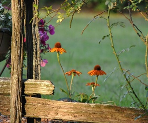 nature, flowers, and fence image
