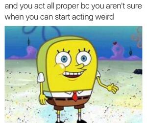 funny, lol, and spongebob image