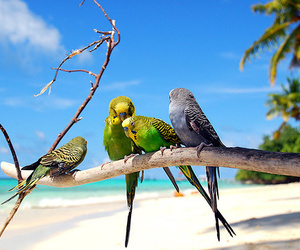 bird, beach, and parrot image