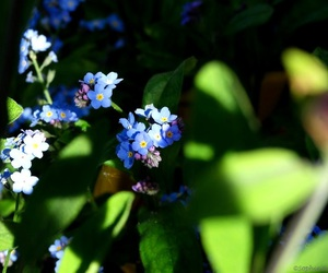 blossom, blue, and flowers image