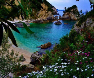 nature, flowers, and beach image