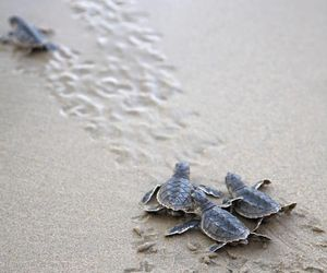 baby, beach, and turtles image