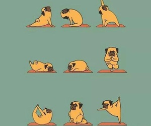 yoga, dog, and pug image