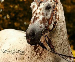 animals, beautiful, and pferde image