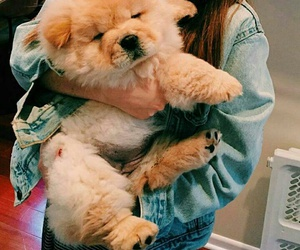 chow chow, puppy, and cute image