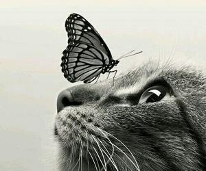 animal, felinos, and meow image