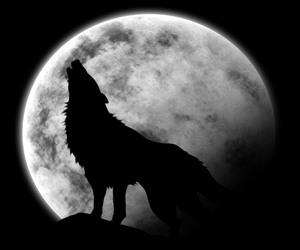 wolf, moon, and lobo image