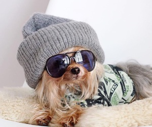 animal, dog, and doglovers image