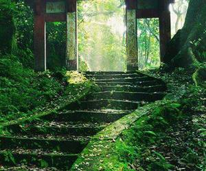 japan, green, and nature image