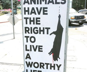 animal rights, vegan, and compassion image