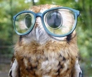 owl, glasses, and animal image