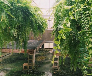cities, greenhouse, and plants image