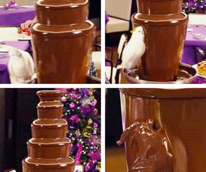 birds, chocolate, and funny image