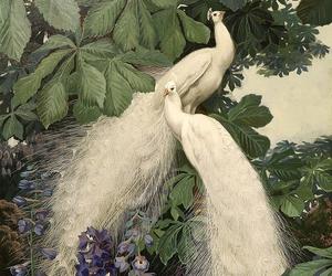 white peacock image